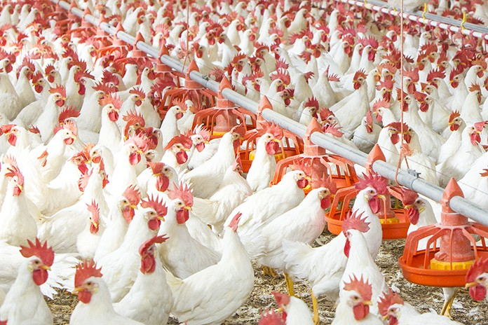 Improving energy costs and air quality in poultry farms ...