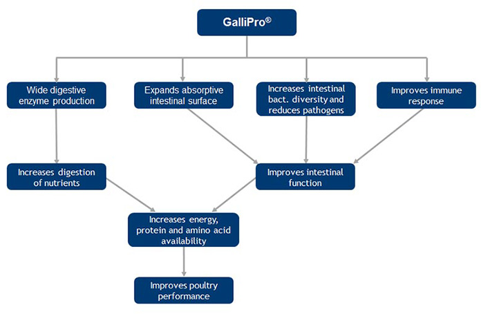 Figure 1. Comprehensive mode of action of GALLIPRO