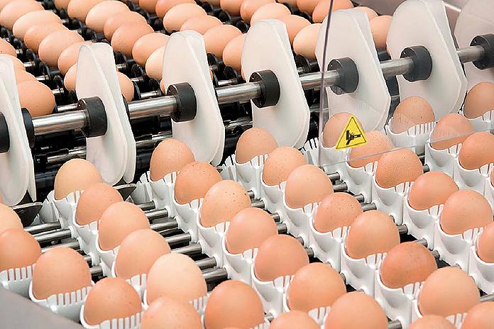 The EU egg industry - Market Trends