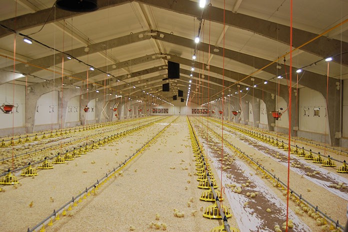 Understanding poultry lighting u2013 Different light sources & Farming Archives - Zootecnica International azcodes.com