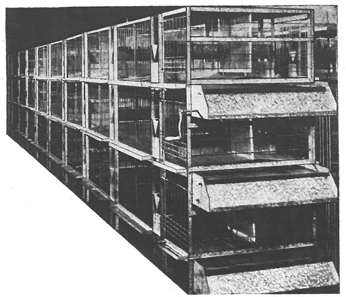 Figure 1 Cage battery (3 tiers; capacity 108 hens) with manure belt (about 1940) (Source: Arndt 1941, p. 316)