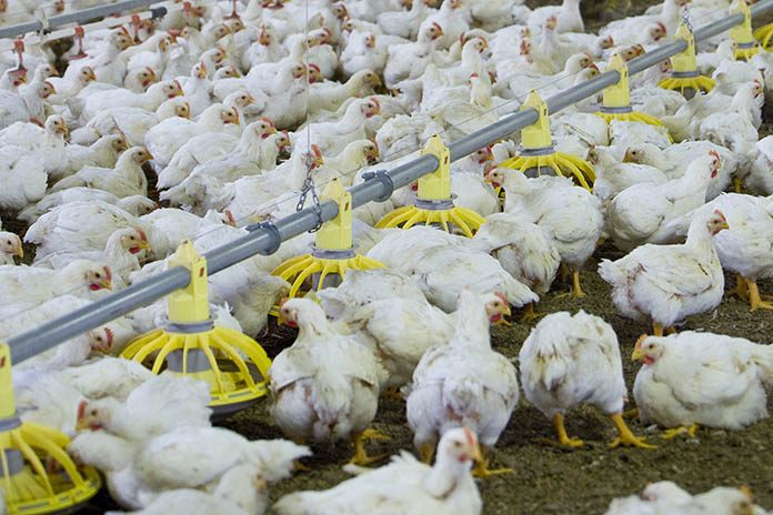 Seminars highlighting innovations in broiler farming