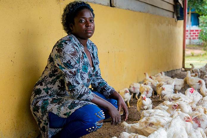 Outlook of Nigeria's poultry feed market - Zootecnica International