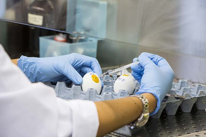 Infectious bronchitis virus (IBV) vaccines produced in eggs