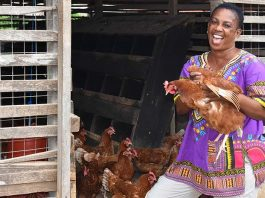 The poultry sector in Kenya