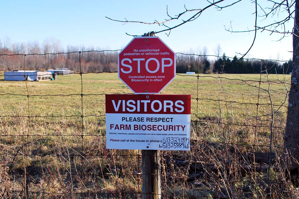 How will the COVID-19 pandemic affect the livestock industry? - Zootecnica  International